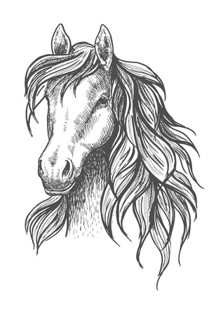 Young horse head sketch with calm look and beautiful wavy mane, peaceful glance and elegant neck. For wildlife symbol or mascot design, equestrian sport or fauna themes