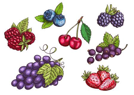 Illustration pour Berries set. Hand drawn color pencil sketch. Vector Strawberry, Blackberry, Blueberry, Cherry, Raspberry, Black currant, Grape berries with leaves - image libre de droit