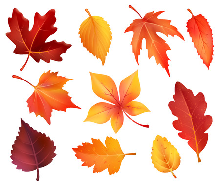Illustration for Autumn leaves isolated icons of maple, chestnut or poplar and oak. Vector set of forest falling leaves of birch, rowan or beech and elm tree autumn foliage for autumn seasonal holiday design - Royalty Free Image