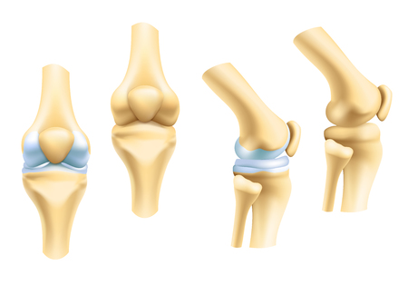Illustration pour Human joints vector icons for orthopedics and surgery medical design. Vector isolated icons of leg knee or arm and hand joints with cartilage synovial fluid for orthopedics treatment medicine pills - image libre de droit