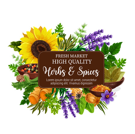 Illustration pour Herbs and spices with aroma plant, seed, flower and roots. Pepper, mint and rosemary, nutmeg, ginger and parsley, dill, bay leaf and saffron, lavender and poppy. Food condiments and seasonings - image libre de droit