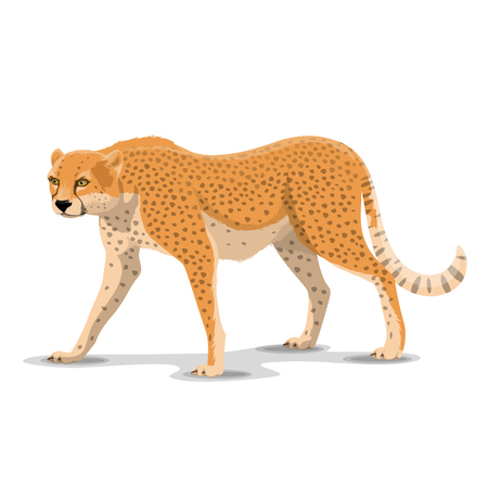 Illustration pour Cheetah animal cartoon character. Vector isolated African wild cougar or guepard and leopard feline species. Africa zoo, zoology or hunting Safari open season theme - image libre de droit