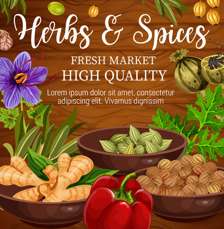 Illustration pour Herbs, spices and vegetables, food seasonings and condiments on wooden background. Vector parsley, pepper and ginger root, oregano, saffron flower and basil, cardamom, nutmeg and coriander seed - image libre de droit