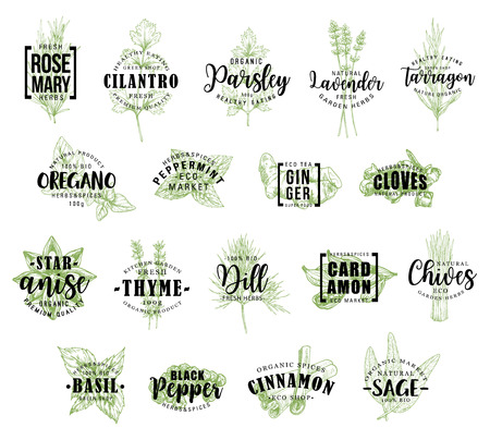 Illustration pour Spice and herb vector lettering. Rosemary and cilantro, parsley and lavender, tarragon and oregano, peppermint and ginger, cloves and anise, thyme and dill, cardamon and chives, basil icons with words - image libre de droit