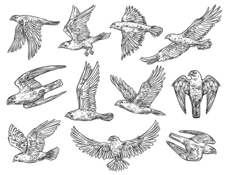 Ilustración de Eagle, hawk and falcon sketches with flying birds of prey. - Imagen libre de derechos
