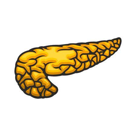 Illustration pour Human internal organ, pancreas icon, digestive system vector. Anatomy element, medicine - image libre de droit