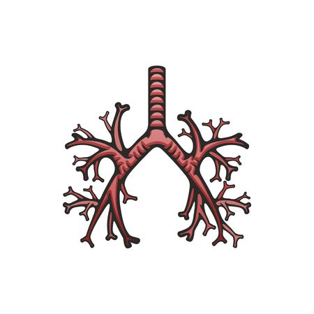 Illustration pour Human lungs internal structure vector. Pulmonary trachea and bronchi icon, body organs anatomy - image libre de droit