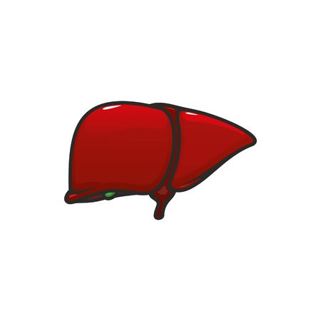 Illustration pour Liver anatomy isolated vector icon. Human internal organ, anatomical structure in digestion system - image libre de droit