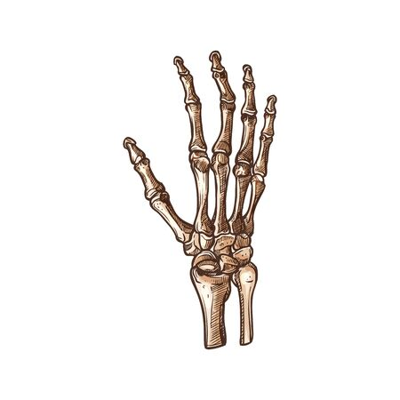 Illustration pour Carpal bones isolated human wrist skeleton sketch. Vector carpus connecting hand to forearm - image libre de droit