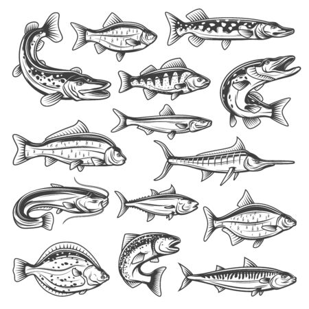 Illustration pour Vector fish species, ocean, sea and freshwater. Fishing sport theme, pike and salmon, tuna and marlin, bream and trout, sprat and carp, sheatfish and perch, mackerel and cruician - image libre de droit