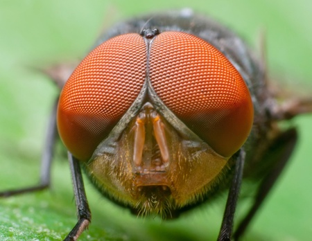 Photo for Macro shot of a fly's head. - Royalty Free Image
