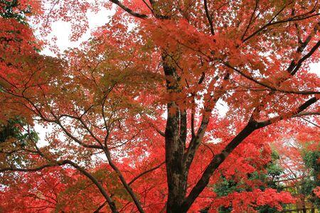 Photo pour fall season in japan temple - image libre de droit