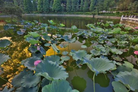 the CUHK Reflection of the Lake Shatin