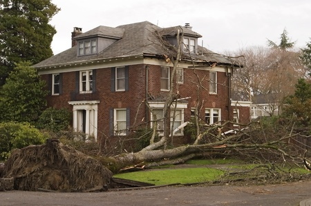 Seattle, Washington, United States - December 15, 2006: In the windstorm of December 2006, this Seattle house was damaged by a large 100 foot elm tree that was uprooted in the high winds of what is referred to as the Hanukkah wind storm.