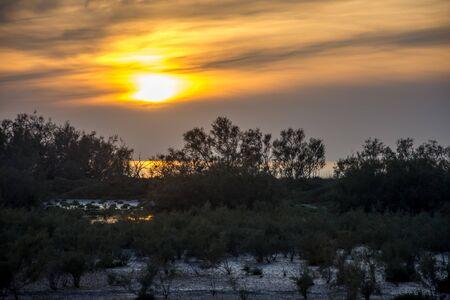 Photo pour landscape of Camargues in the south of France. Ornithological nature reserve - image libre de droit