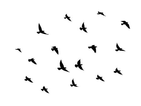 Illustration pour Black vector flying birds flock silhouettes isolated on white background. symbol tattoo design graphic. - image libre de droit