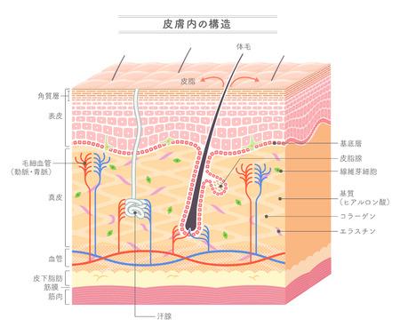 Illustration pour Structure in the skin Japanese notation - image libre de droit