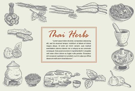 Hand drawn of Thai herbs
