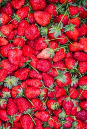 Strawberry freshly