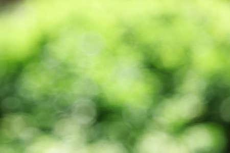 Photo pour Blur background from tree in natural light - image libre de droit