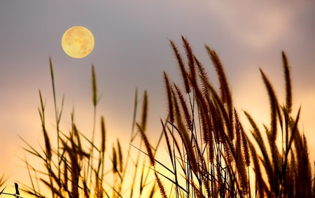 Picture of grass and moon on the sky silhouette.