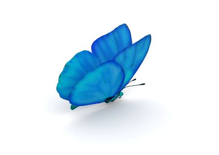 Blue Butterfly Isolated (3d isolated characters on white background series)