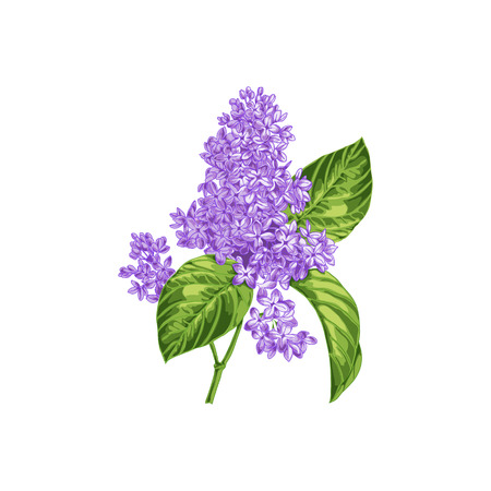 The branch of blooming lilacs