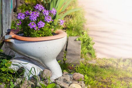 Photo for purple flowers growing in an old toilet - Royalty Free Image