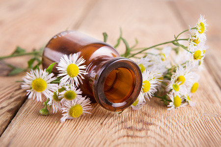 Drop of massage oil in a glass bottle with camomile flowers