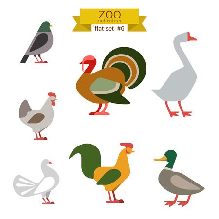 Flat design vector birds icon set. Dove, turkey, goose, chicken, rooster, duck. Flat zoo children cartoon collection.