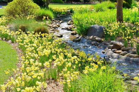 A small stone creek with daffodils and other plants.