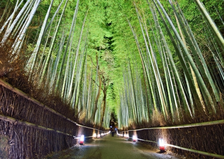 The Bamboo Forest Of Kyoto