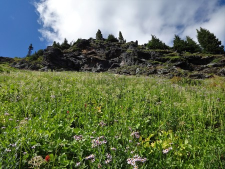 Wildflowers bloom on a slope of Yellow Aster Butte in summer