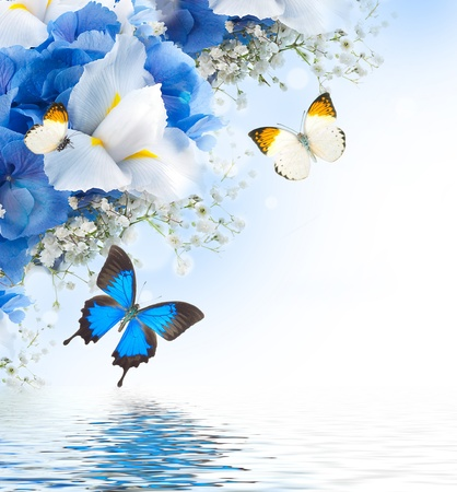 Photo pour Flowers and butterfly, blue hydrangeas and white irises - image libre de droit