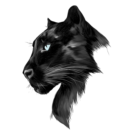 Illustration pour The head is black Panther's profile looking into the distance, graphics sketch vector black and white drawing. - image libre de droit