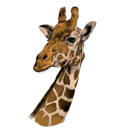 Photo pour the head of a giraffe sketch vector graphics color picture brown - image libre de droit