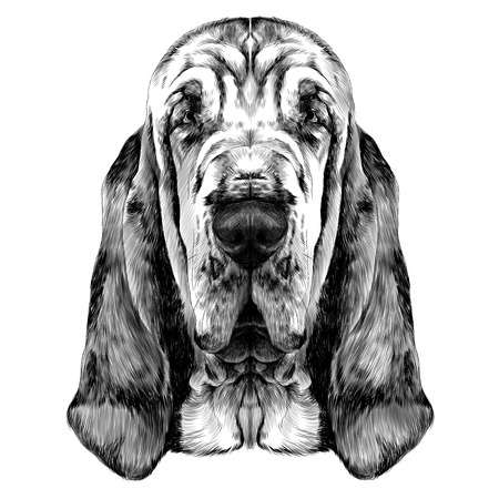 Illustration pour the head of the dog breed Bloodhound vector graphics sketch black and white - image libre de droit