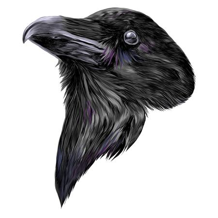 Illustration pour the Raven head sketch vector graphics color picture - image libre de droit