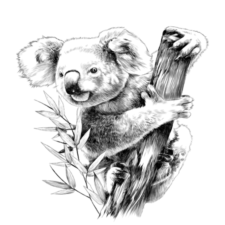 Ilustración de Koala sitting on a eucalyptus snag eats sketch vector graphics monochrome drawing - Imagen libre de derechos