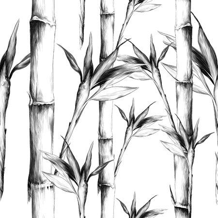Photo pour Leaves branches stem bamboo pattern flowers texture frame sketch graphics black-and-white drawing - image libre de droit
