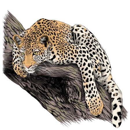 Yes leopard is the trunk of the tree sketch vector graphics color picture