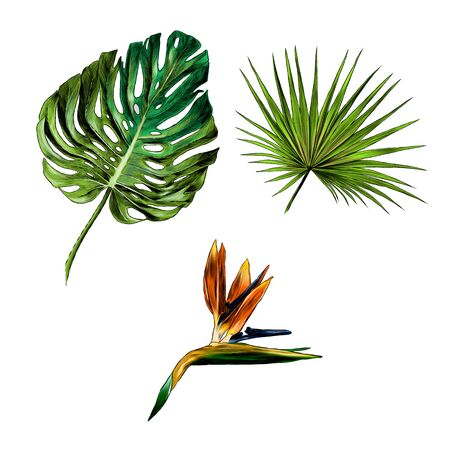 Illustration for set of tropical leaves and flowers, sketch vector graphics color illustration on white background - Royalty Free Image