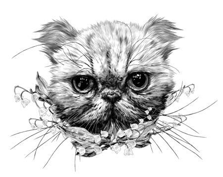 Ilustración de muzzle of an Exot cat with a long mustache surrounded by bell flowers, sketch vector graphics monochrome illustration on a white background - Imagen libre de derechos