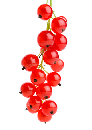 Red currants on white background