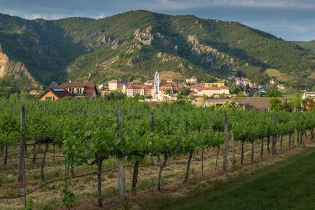 View of Durnstein through vineyards in summer evening. Lower Austria.