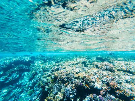 Photo pour Carall reef of the red sea. Egypt - image libre de droit