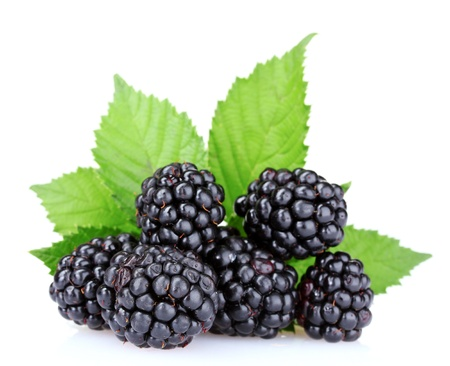 beautiful blackberries isolated on white