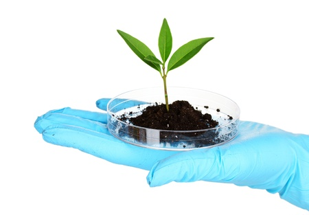 plant and hand in laboratory isolated on white