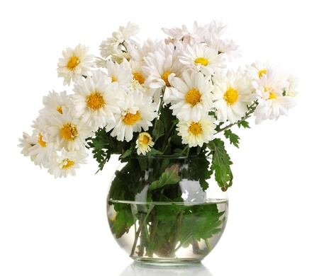 beautiful bouquet of daisies in vase isolated on white