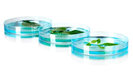 Genetically modified plants tested in petri dishes on gray background
